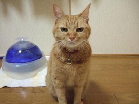 2007_junichibi1580141