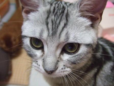 2007_junichibi1560208