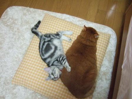2007_junichibi1600077