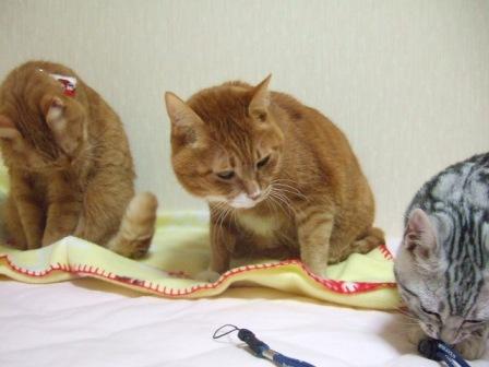 2007_junichibi1610133