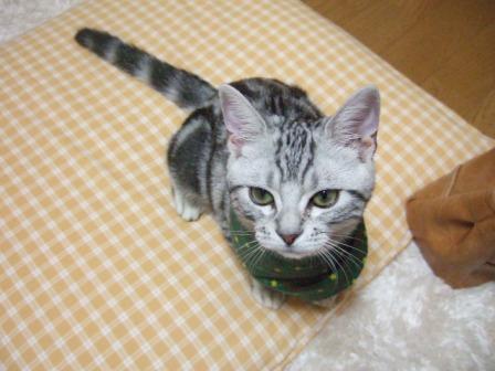2007_junichibi1620194
