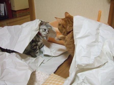 2007_junichibi1610162