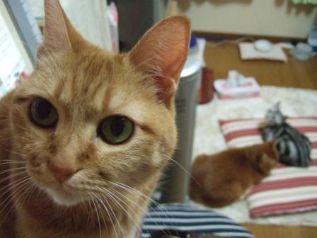 2007_junichibi1640055