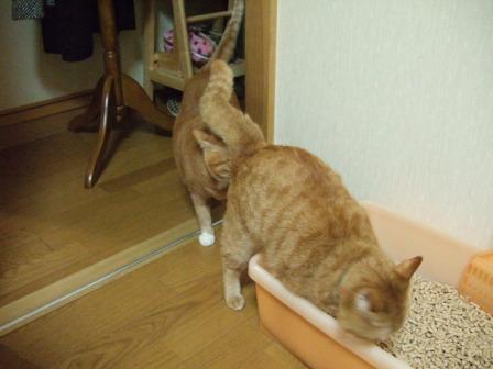 2007_0106junichibi510258_1