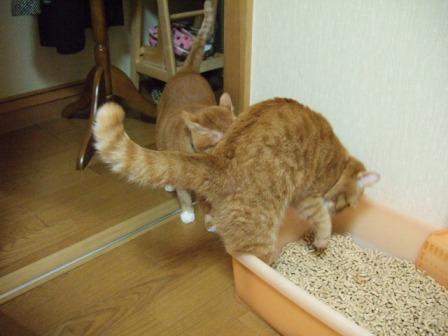 2007_0106junichibi510259_1