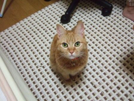 2007_0106junichibi510301