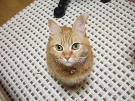 2007_0106junichibi510302