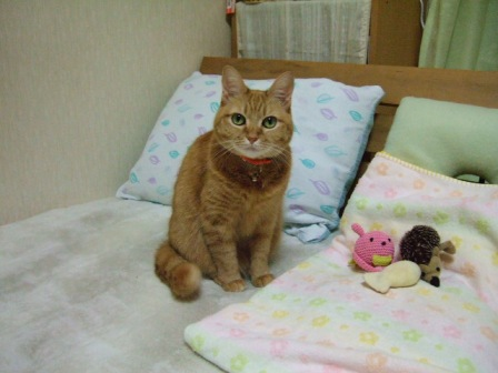 2007_0108junichibi520413