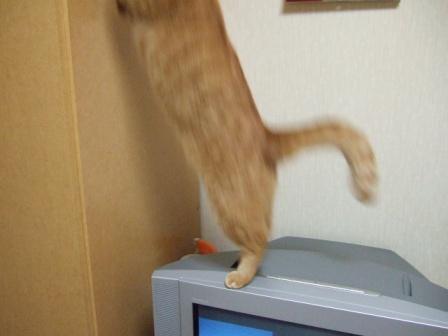 2007_0109junichibi530442_1