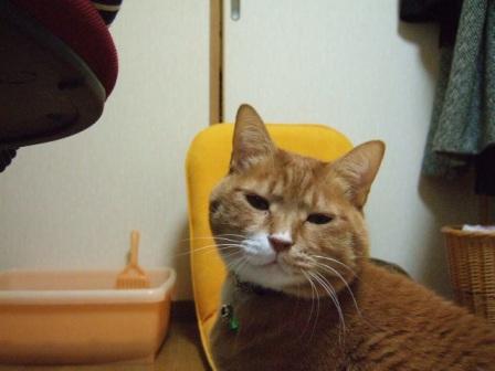 2007_0109junichibi530455