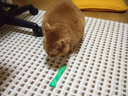 2007_0109junichibi530466