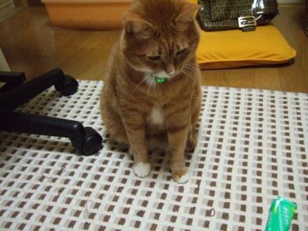 2007_0109junichibi530473