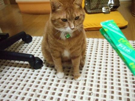 2007_0109junichibi530478