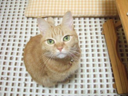 2007_0114junichibi540480_1
