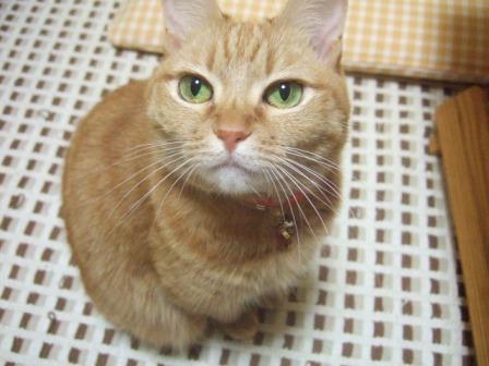 2007_0114junichibi540484_1