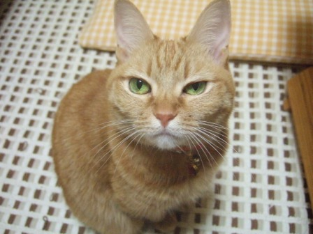 2007_0114junichibi540485_1
