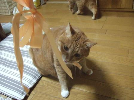 2007_0114junichibi540500