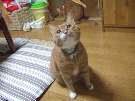 2007_0114junichibi540505