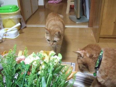 2007_0114junichibi540511_1