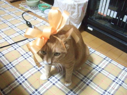 2007_0114junichibi540541