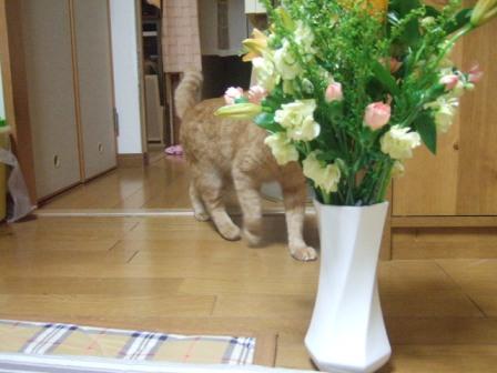 2007_0114junichibi540548