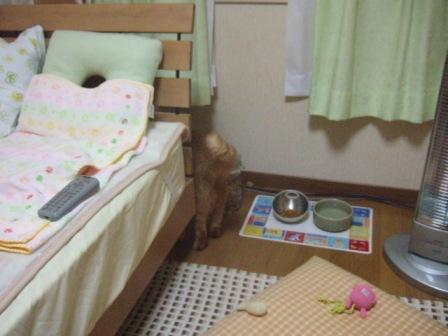 2007_0119junichibi550579