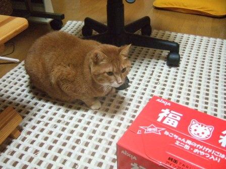 2007_0119junichibi550596