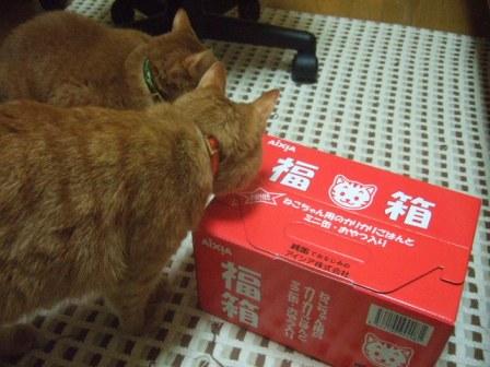 2007_0119junichibi550597