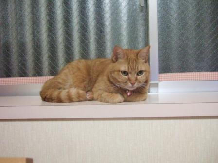 2007_0119junichibi550618