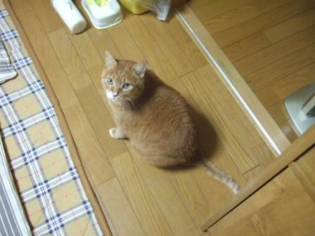 2007_0119junichibi550644