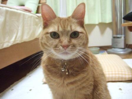 2007_0204junichibi580168