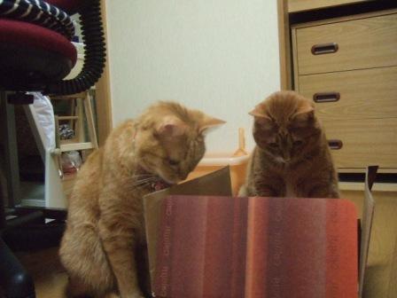 2007_0221junichibi610035