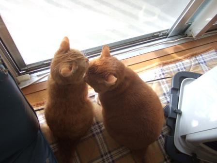 2007_0227junichibi630030