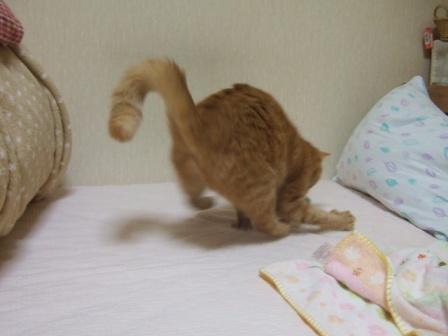 2007_0301junichibi640126_2