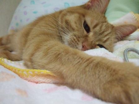 2007_0301junichibi640160