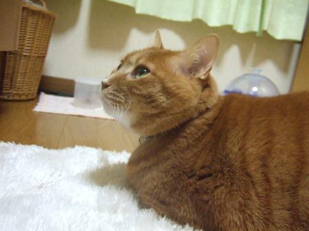 2007_0301junichibi640177_1