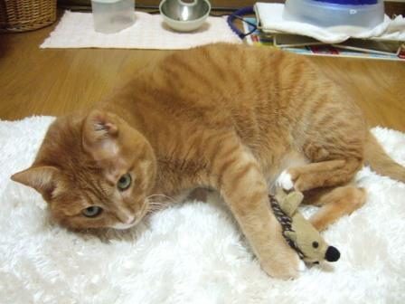 2007_0301junichibi640181