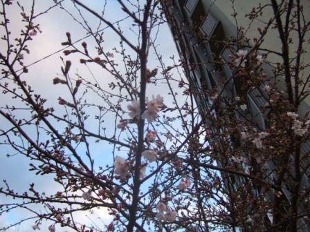 2007_0330junichibi750100