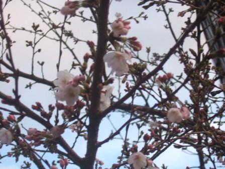 2007_0330junichibi750101