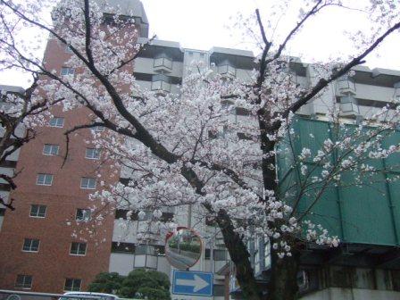 2007_0402junichibi760121