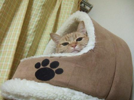 2007_0402junichibi760137