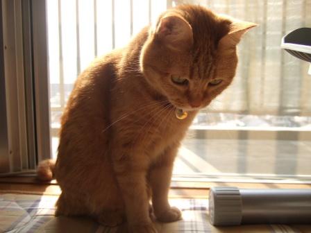 2007_0411junichibi800142