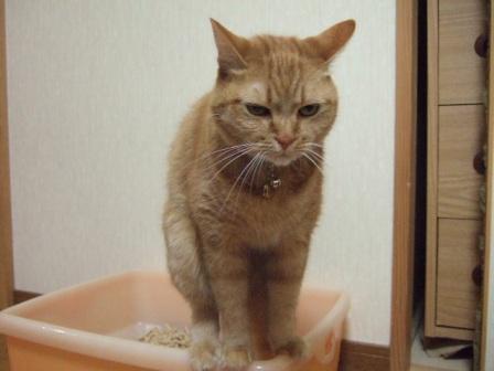 2007_0424junichibi840133