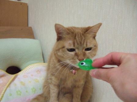 2007_0501junichibi860032