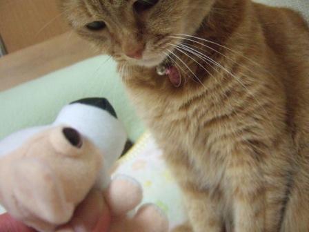 2007_0501junichibi860041_2