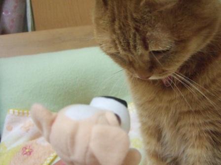 2007_0501junichibi860042_1