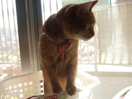 2007_0515junichibi900259