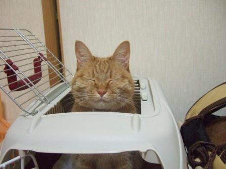 2007_0515junichibi900274