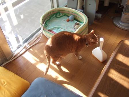 2007_0515junichibi900311_1