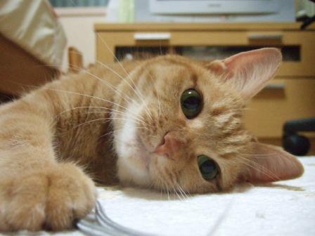 2007_junichibi1050072